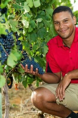 Ernie Els Wines - Viticulturist