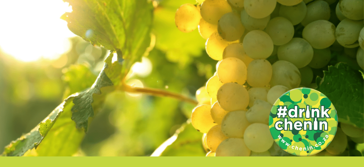 Drink Chenin Blanc! Ontdek de beste Chenin Blanc uit Zuid-Afrika